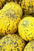 Melons close up — Стоковое фото