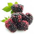 Group ripe blackberry - Stock Photo