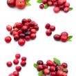 Collage from cranberry — Stock Photo