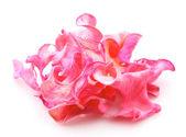 Kronblad av rosor — Stockfoto