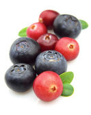Bilberry and cranberry — Stock Photo