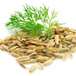 Seeds and a fennel branch — Stock Photo #4719789