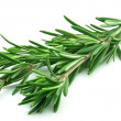 Twig of rosemary — Stock Photo #5136053