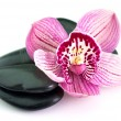Orchid flower — Stock Photo #5141844