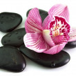 Stones with orchid flower - Stock Photo