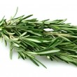 Twig of rosemary — Foto Stock
