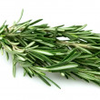 Twig of rosemary — Stock Photo #5346460