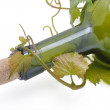 Grape-vine and bottle — Stock Photo