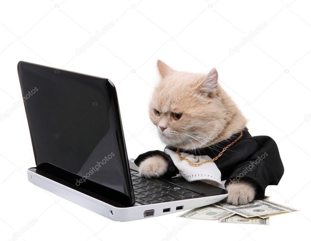 depositphotos_4318093-Red-cat-sitting-on