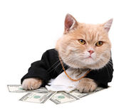 Red cat sitting on the dollar on the white background, Christmas — Stock Photo