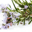 Stock Photo: Branch of rosemary with flowers