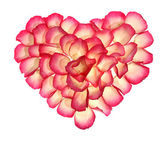 Heart from the petals of rose — Stock Photo