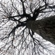 Silhouette of a tree without leaves — Stock Photo