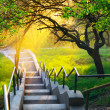 Sunshine in beautiful park — Stock Photo