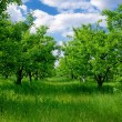 Big field of trees - Stock Photo