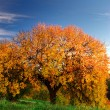 Big autumn tree — Stock Photo #4289572