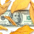 Dollar in autumn leafs — Stock Photo