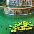 Water and leafs from water lily — Stock Photo #4290106