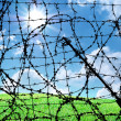 Barbed wire and freedom — Stock Photo