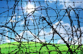 Barbed wire and freedom — Stok fotoğraf