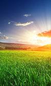 Lever du soleil dans la prairie de grean — Photo