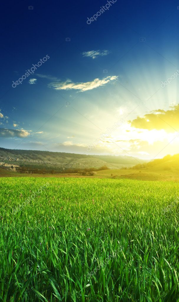Sunrise in grean meadow. Nature composition. — Stock Photo #4292564