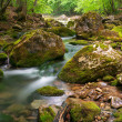 Spring river in canyon — Stock Photo #5019710