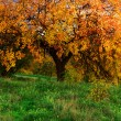 Big autumn tree — Stock Photo
