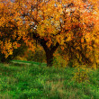 Big autumn tree — Stock Photo #5019724