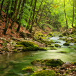 River deep in mountain forest — Stock Photo #5019797