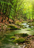River deep in mountain forest — Photo