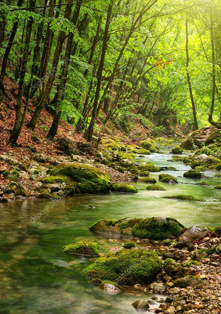 Фотообои Река глубоко в горы лес