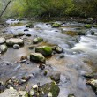 Panorama of a wild river — Stock Photo