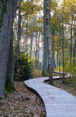 Wooden footpath at oak forest — Stock Photo