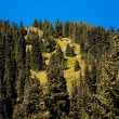 Coniferous forest — Stock Photo #4085064