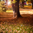 Autumn Park — Stock Photo #4317137