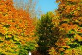 Foresta d'autunno colorato — Foto Stock