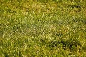 Green grass in sunlight — Stock Photo