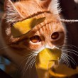 Ginger cat — Stockfoto