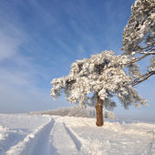 Tree in winter with snow covered fields — Stock Photo
