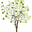 Tree with green leafage - Stock Vector