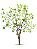 Tree with green leafage — Stockvector