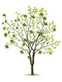 与绿色木酢树 — 图库矢量图片