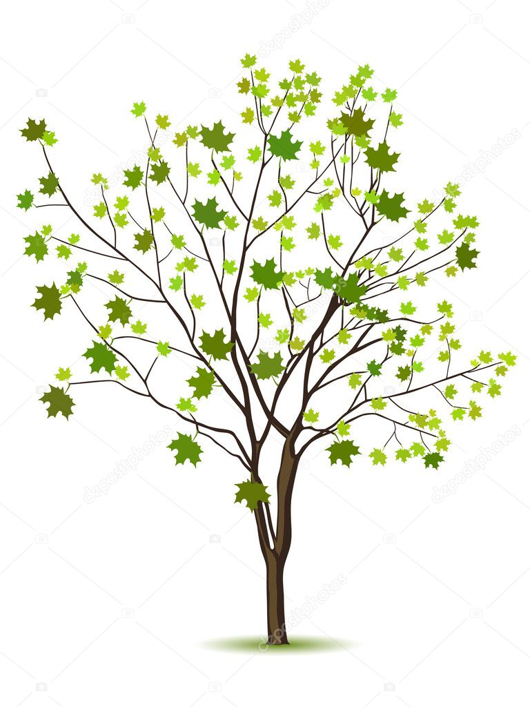 Tree with green leafage isolated on a white — Stock Vector #5178701