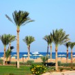 Palm trees on beach — Foto Stock