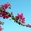 Blossom branch with pink flowers — Stock Photo
