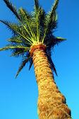 Palm tree under blue sky — Stock Photo