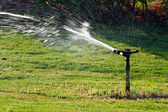 Sprinkler watering green lawn — Stock Photo