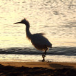 Stock Photo: Fun disheveled heron bird