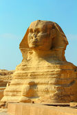 Famous egypt sphinx in Giza — Stock Photo